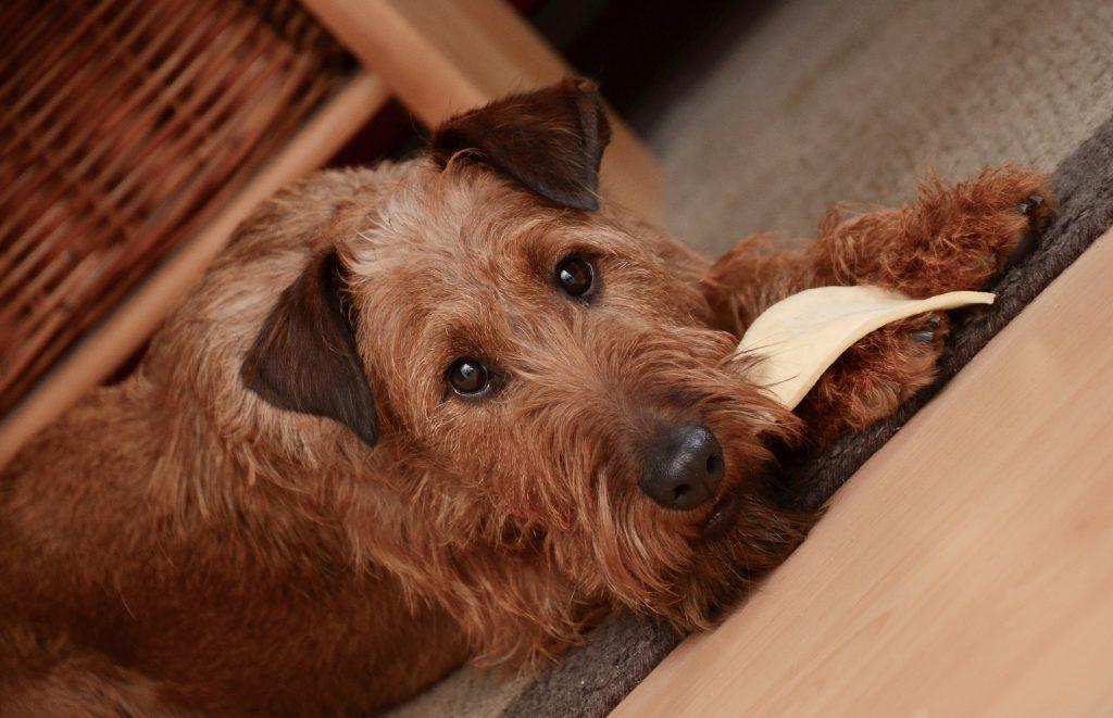 a dog eating-Balanced Homemade Dog Food