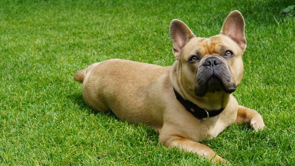 Why Do Dogs Eat Grass, Should You be Worried? |