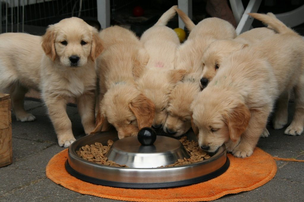 Puppies eating healthy food not on the Foods not to feed dogs ever