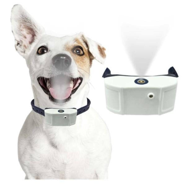 how to train a dog with a shock collar