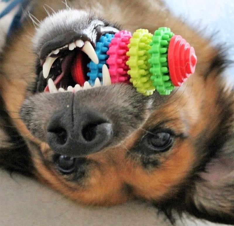 Toothbrush  toy to keep your dog busy and his/her teeth clean