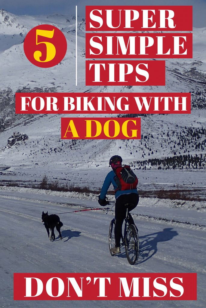 how to go biking with a dog