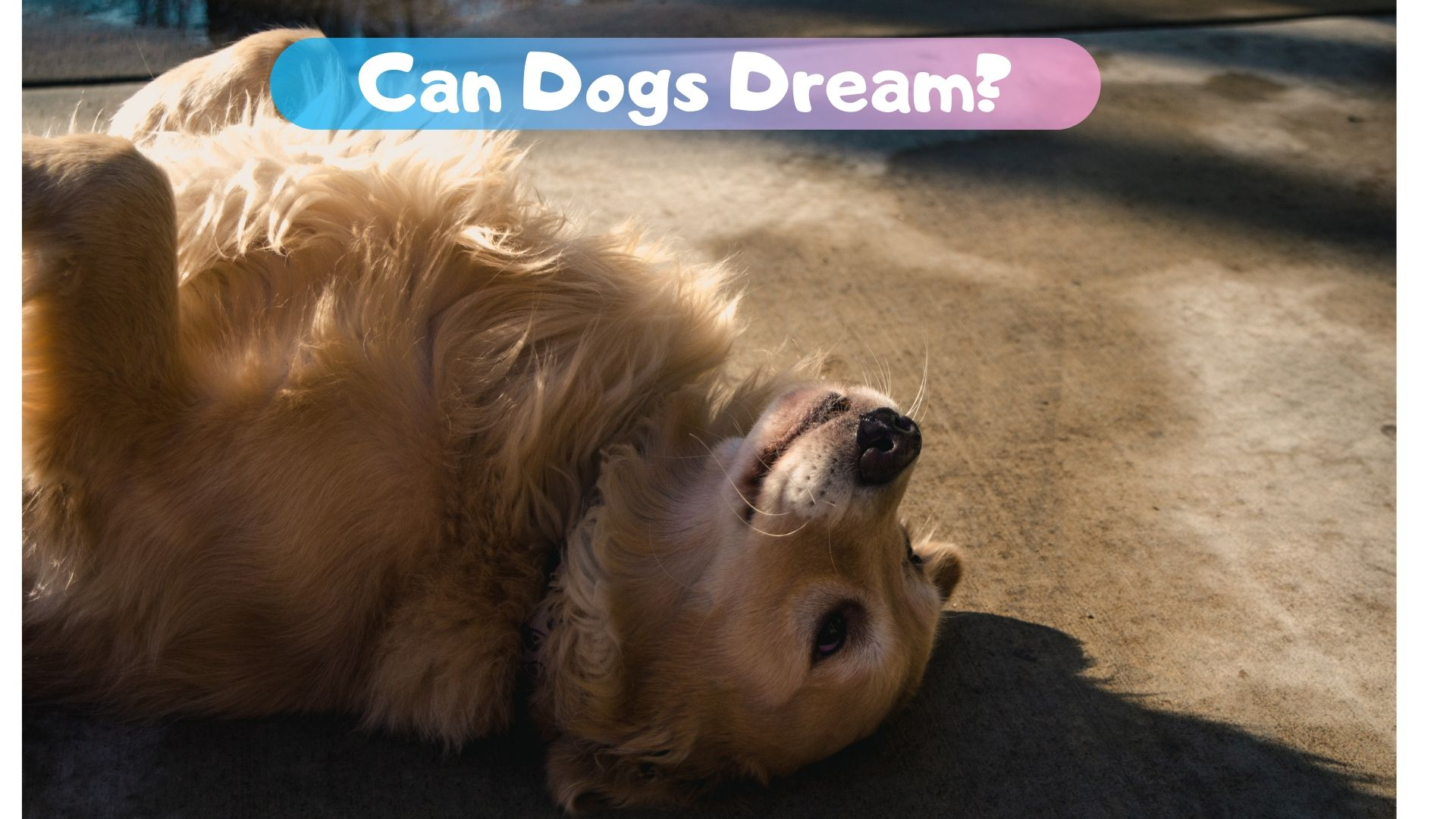 Can dogs dream?
