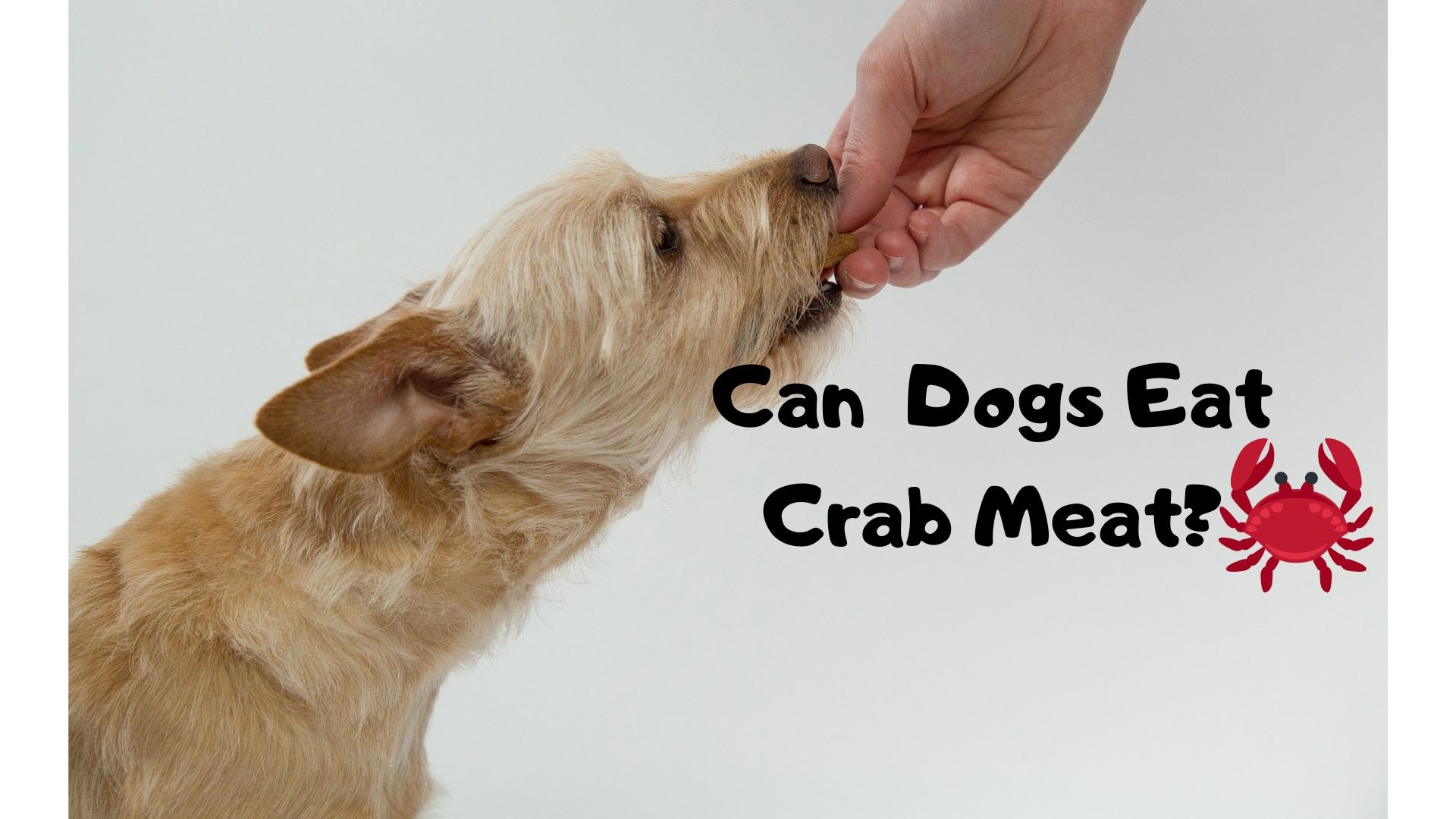 Can dogs eat crab meat?