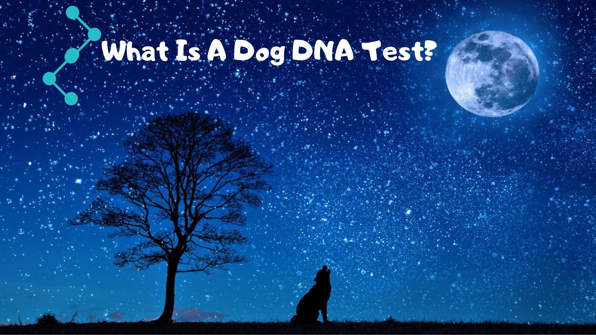 What's a dog DNA test?
