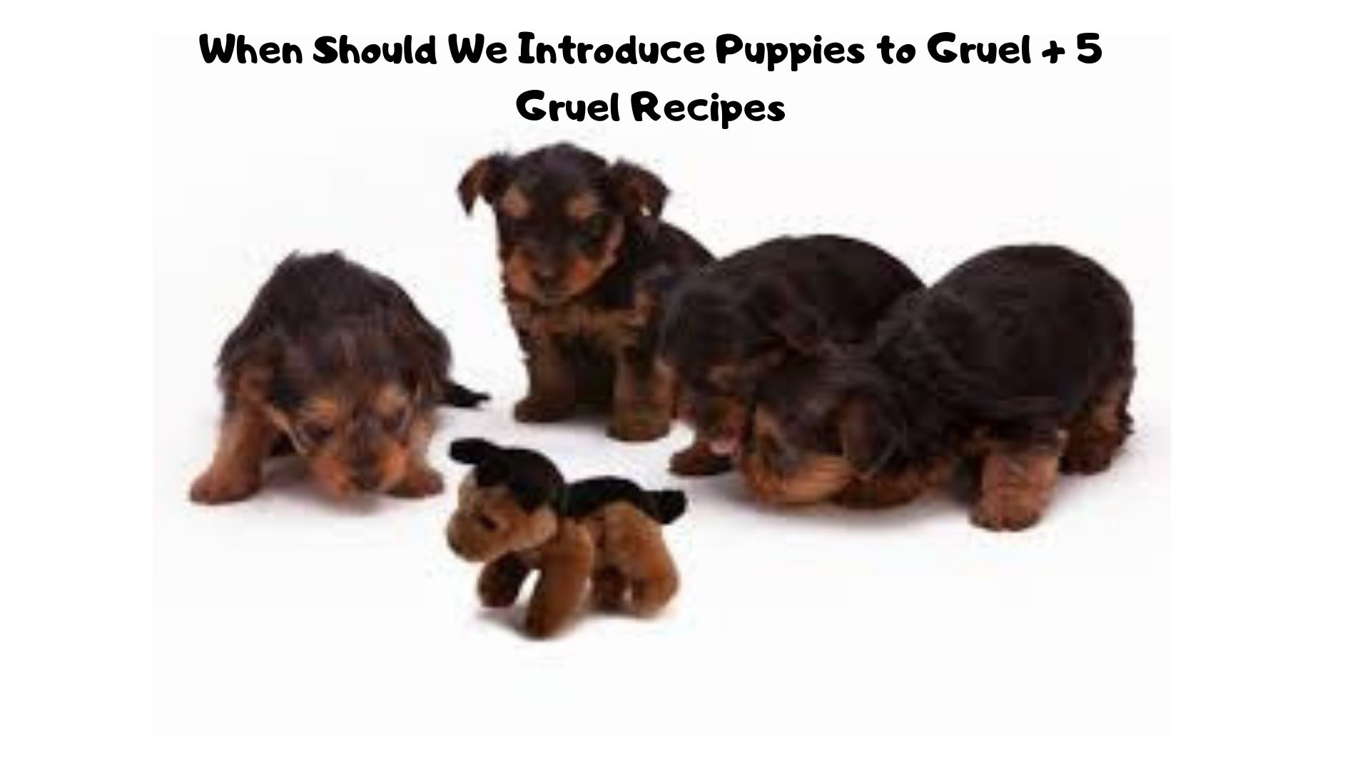 When Should We Introduce Puppies to Gruel ?