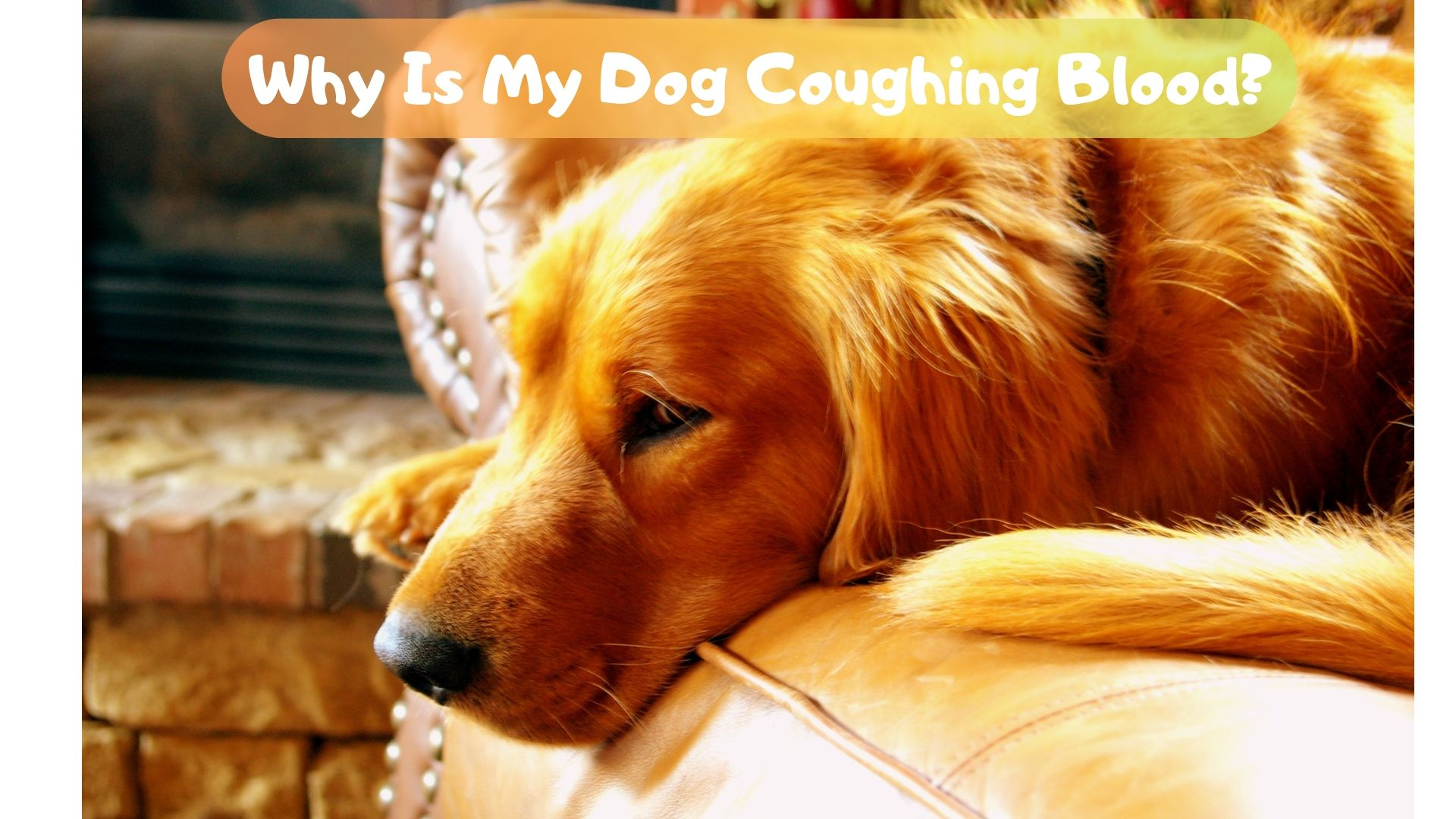 Why is my dog coughing blood?