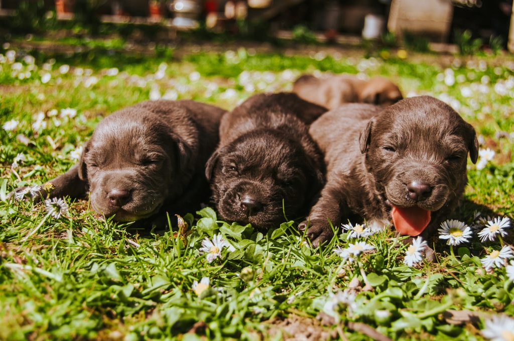 When Should We Introduce Puppies to Gruel