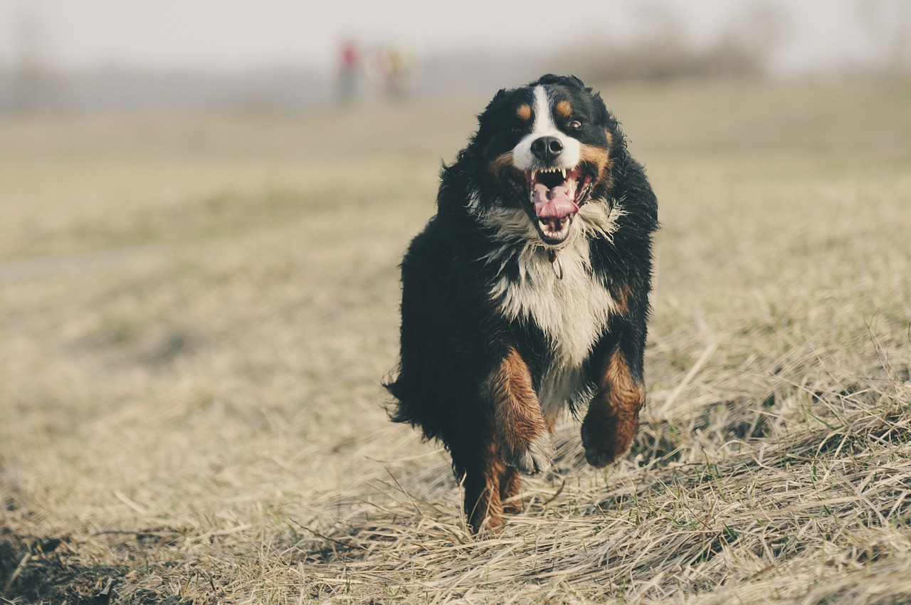 Why Dogs Get Excited when You Take Their Collar Off​?