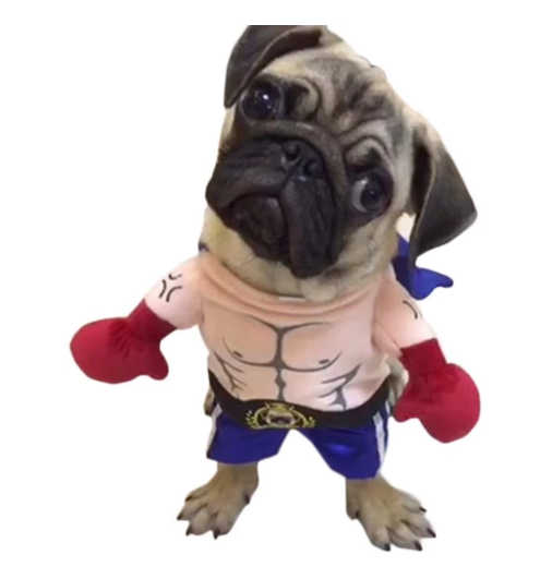 Top 30 Large Dog Halloween Costumes to Glamour Up Your Dog  
