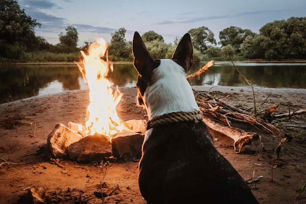 a dog in front of campfire-dogs can see in the dark
