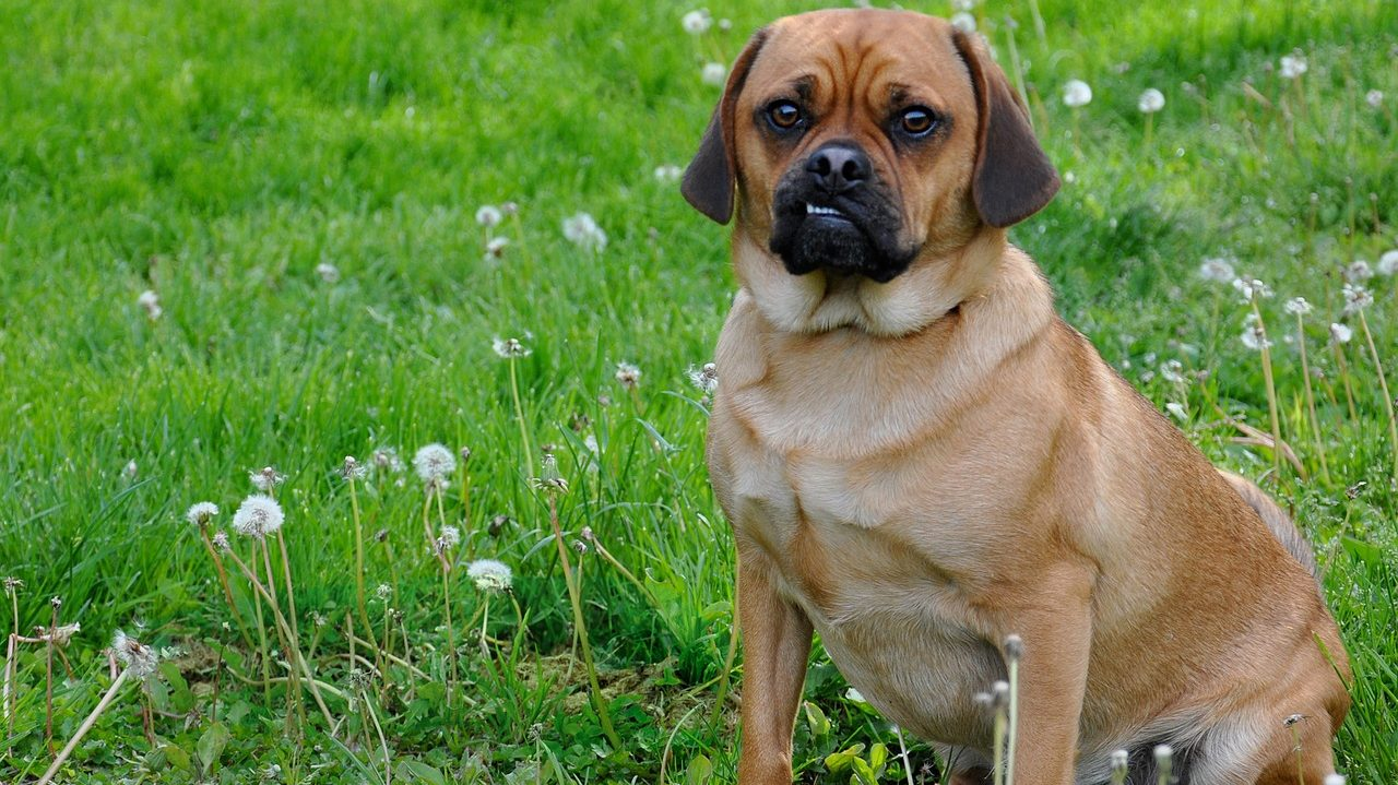 Dog Lip Quivering: Why, And When To Worry. |