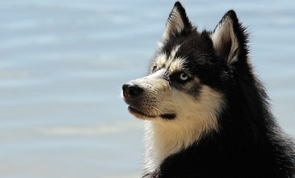 Can Dogs Sense Danger Before It Occurs? |