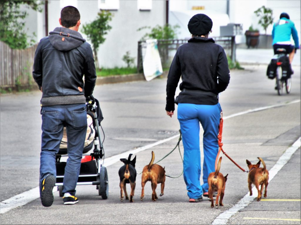two people walking with dogs-how to treat Constipated Dog?