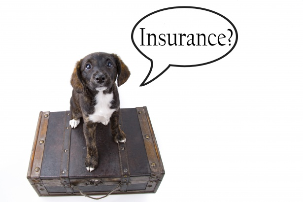 Does pet insurance cover neutering and Spaying ?