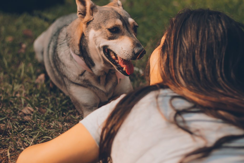 Do Dogs Know Their Names? Find Out The Truth! |