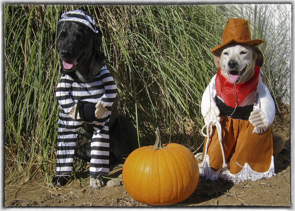 10 Tips for Choosing the Right Halloween Costume for Your Dog