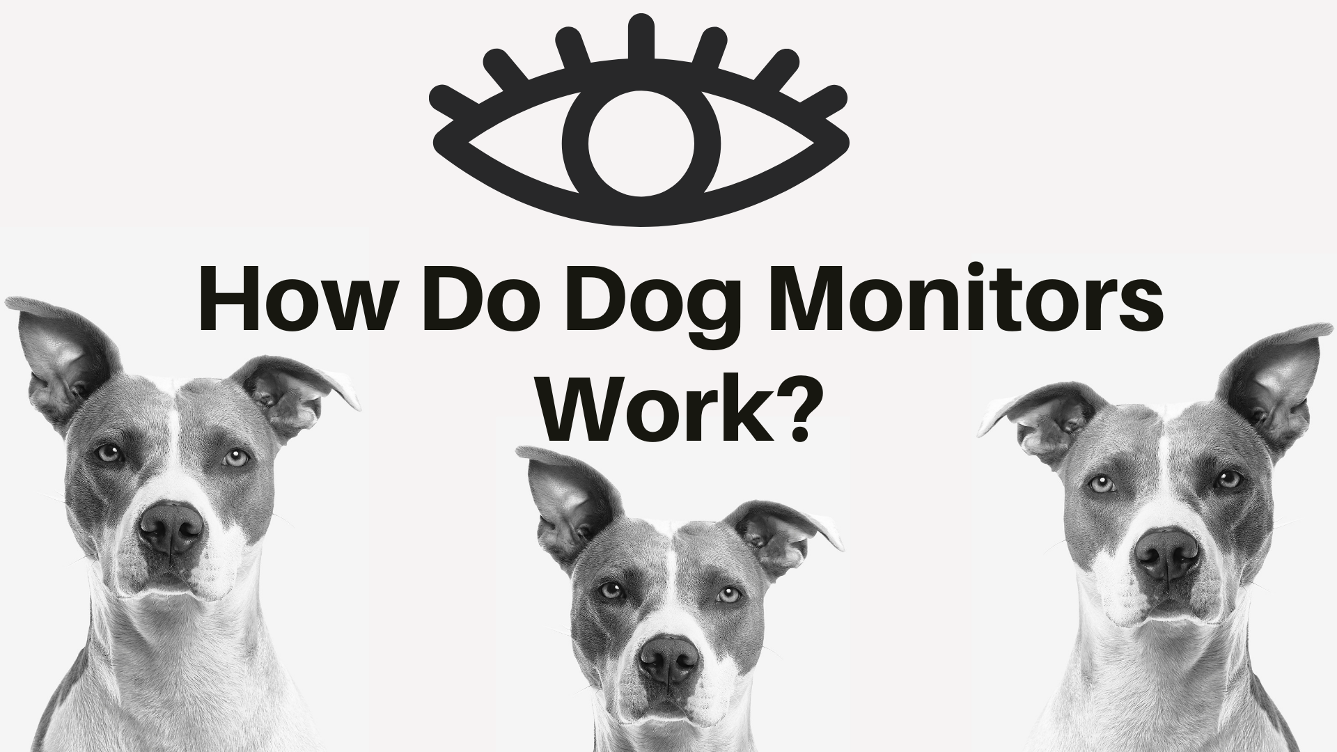 How Do Dog Monitors Work?