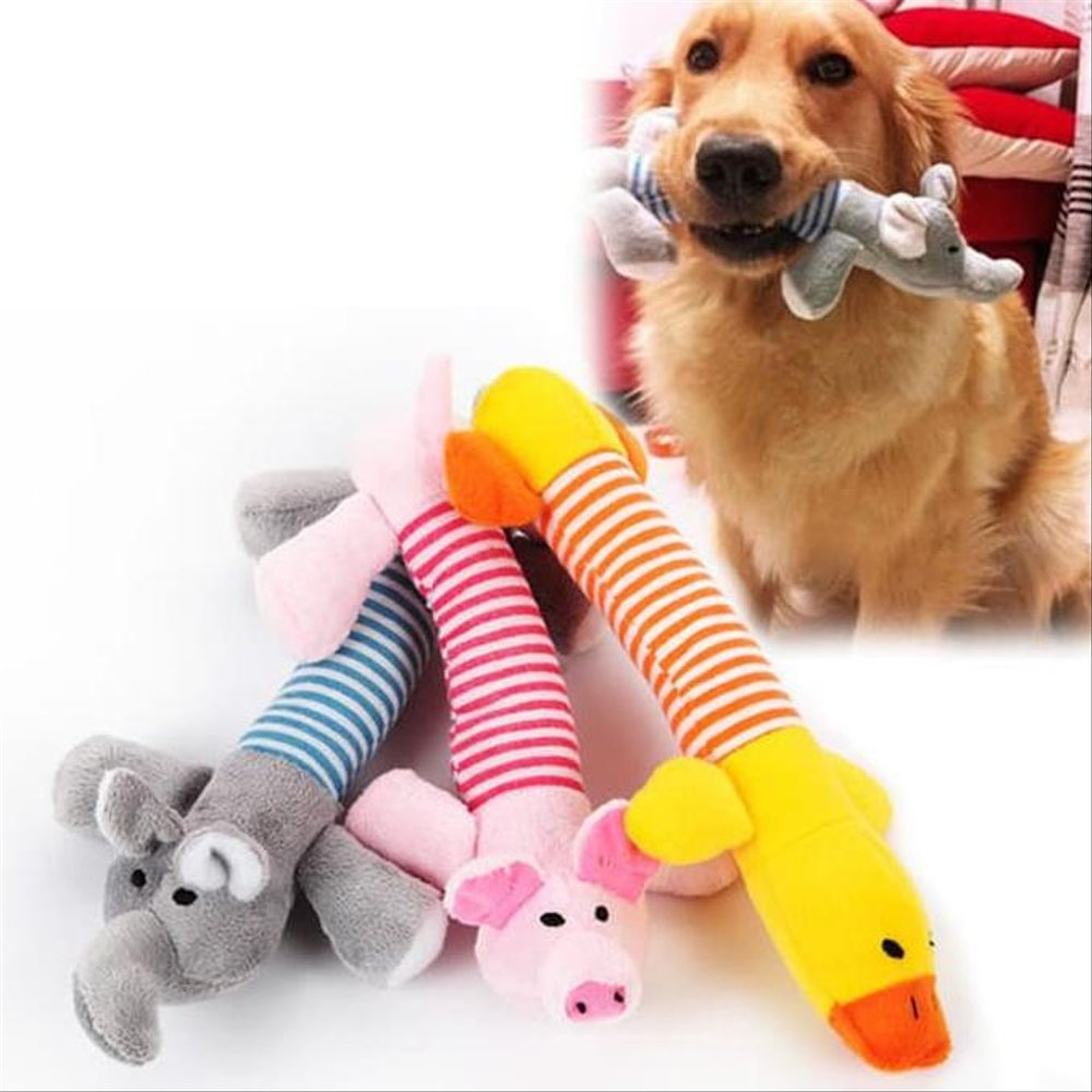 Top 5 Chew Toys Good for Your Dog's Teeth and Brain! |