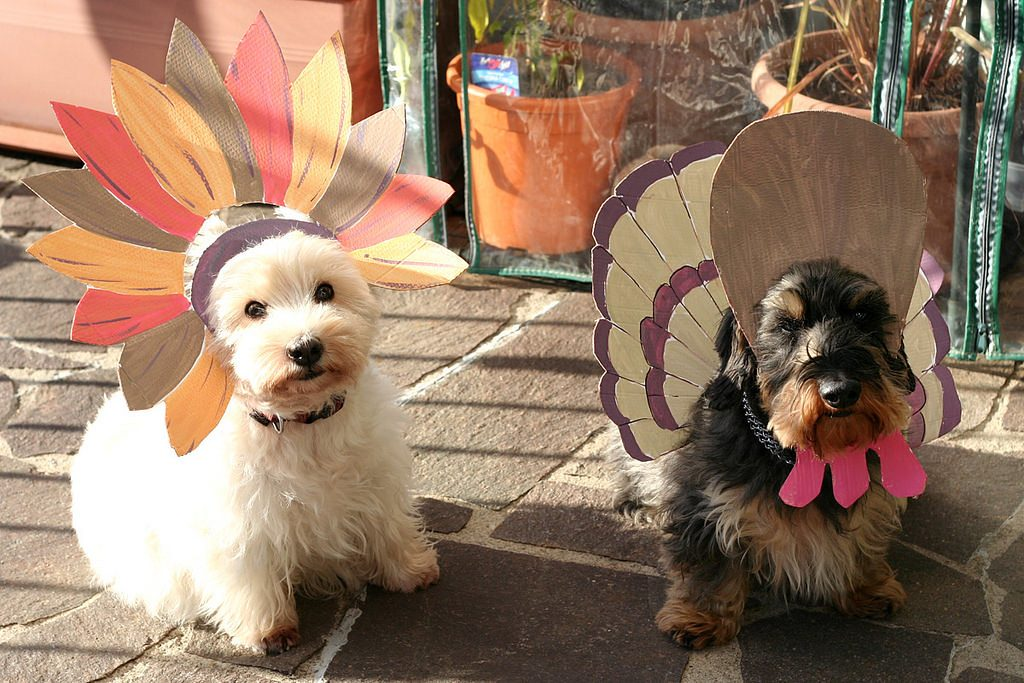 Why You Should Watch The Thanksgiving Dog Show Instead of Football- Two dogs dressed up as turkeys