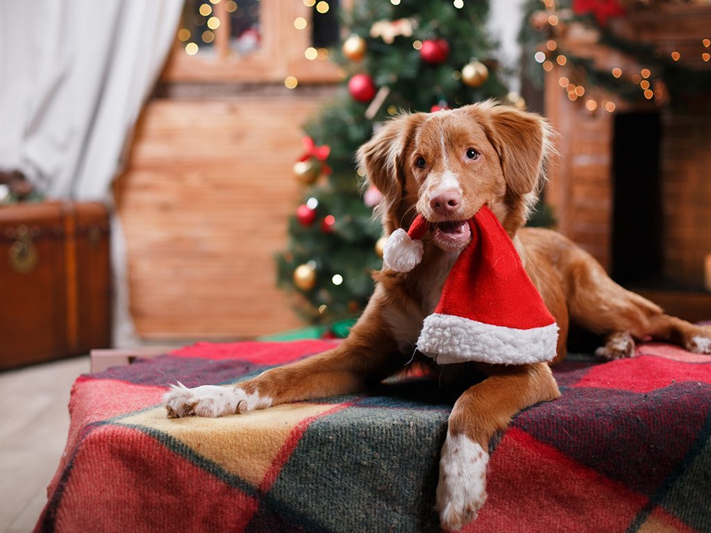 Top 10 Fun Ways to Celebrate Christmas with Your Dog  