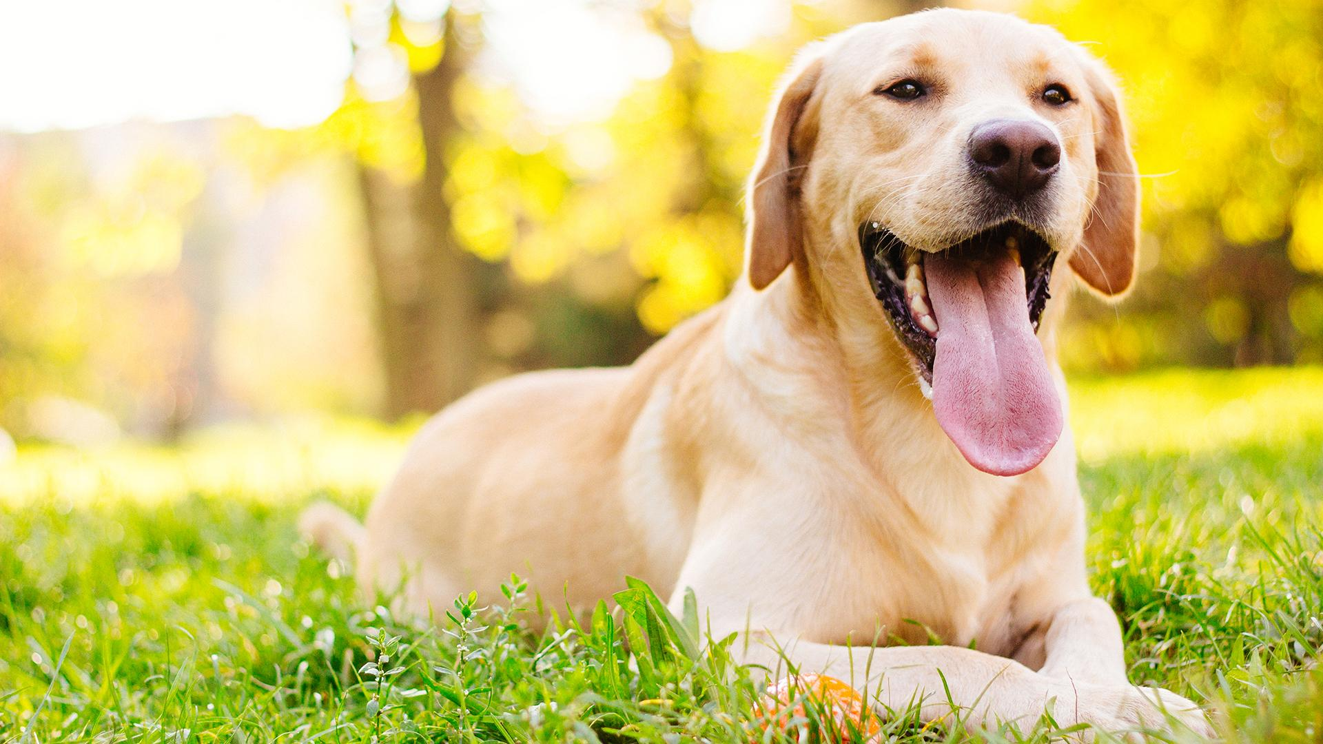 The Best 9 Dog DNA Test Kit to Get For Your Dog in 2020 |
