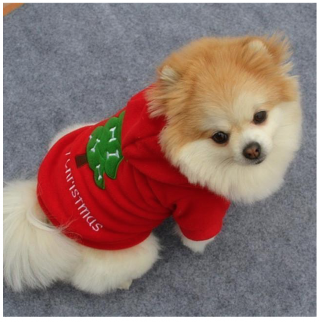 Ugly Christmas Sweaters for Dogs- A dog wearing the red Merry Christmas Sweatshirt