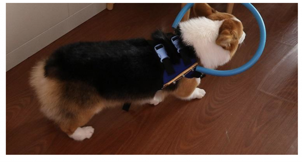 The halo collar for blind dogs