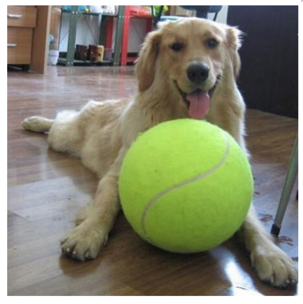 GIANTB™- The giant tennis balls for dogs