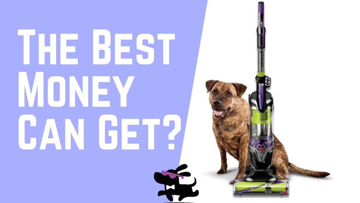 Is Bissell Pet Hair Eraser The Best For Pet Hair-Free Home? |