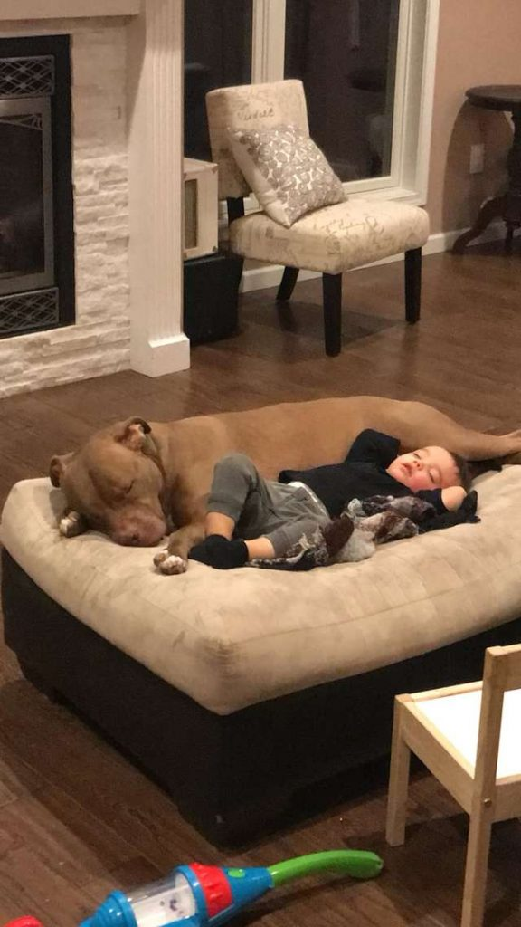When This Boy Got Really Sick, He Wanted Only His Rescue Dog By His Side  