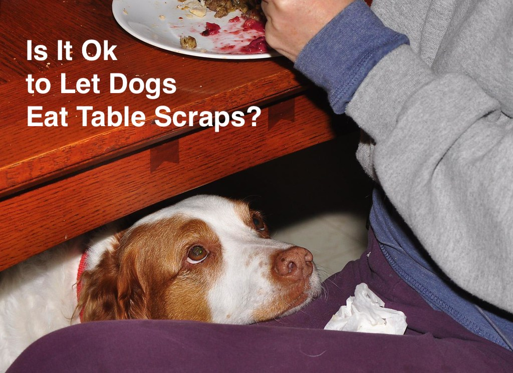 Is It Ok to Let Dogs Eat Table Scraps?