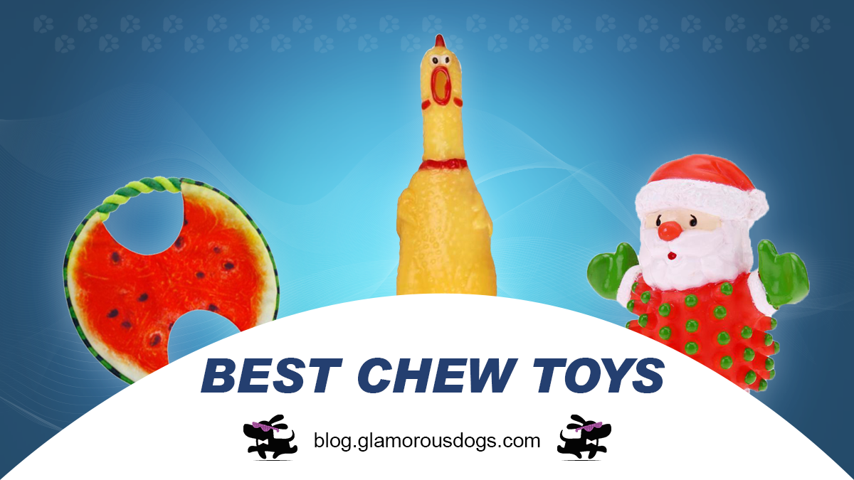 Best 5 Dental Chew Toys to Clean Your Dog's Teeth |