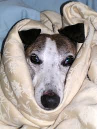 Why Vaping Near Dogs is Harmful to Them- A sick dog wrapped in a blanket