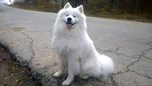 Is Incontinence A Reason to Euthanize A Dog- a smiling dog