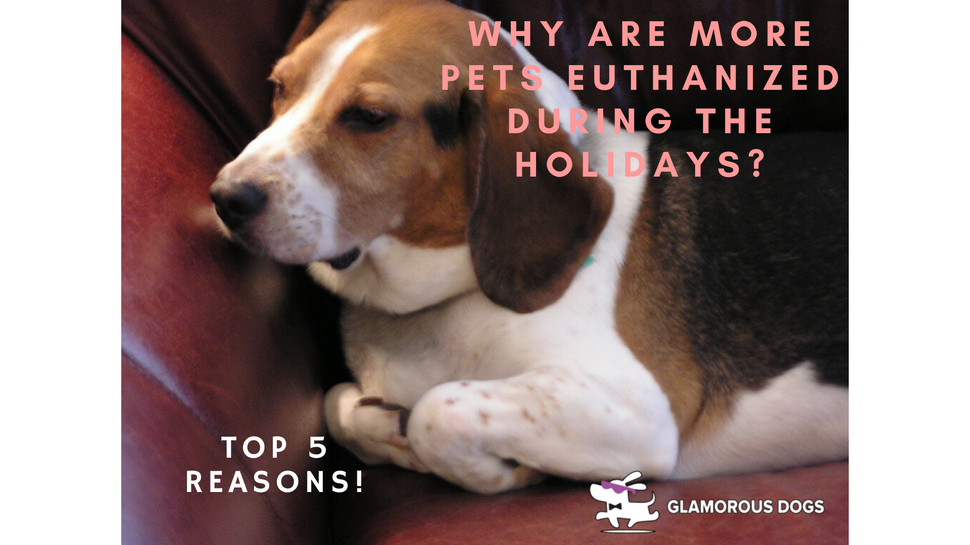 Why Are More Pets Euthanized During the Holidays: Top 5 Reasons