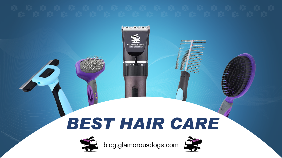 The Best Dog Grooming Tools: What to Use for Your Dog's Safety And Hygiene |