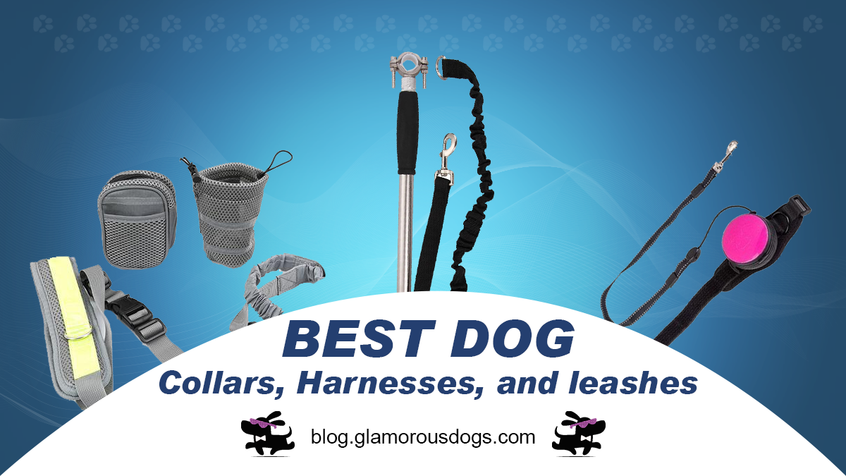 Dog Collars, Harnesses, and leashes-Our Top Picks for 2020 |