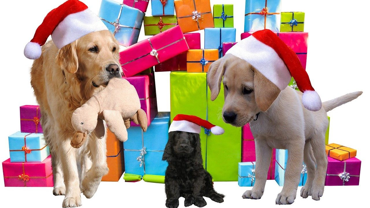 15+ Awesome Cyber Monday Offers for Dog Parents and Lovers |