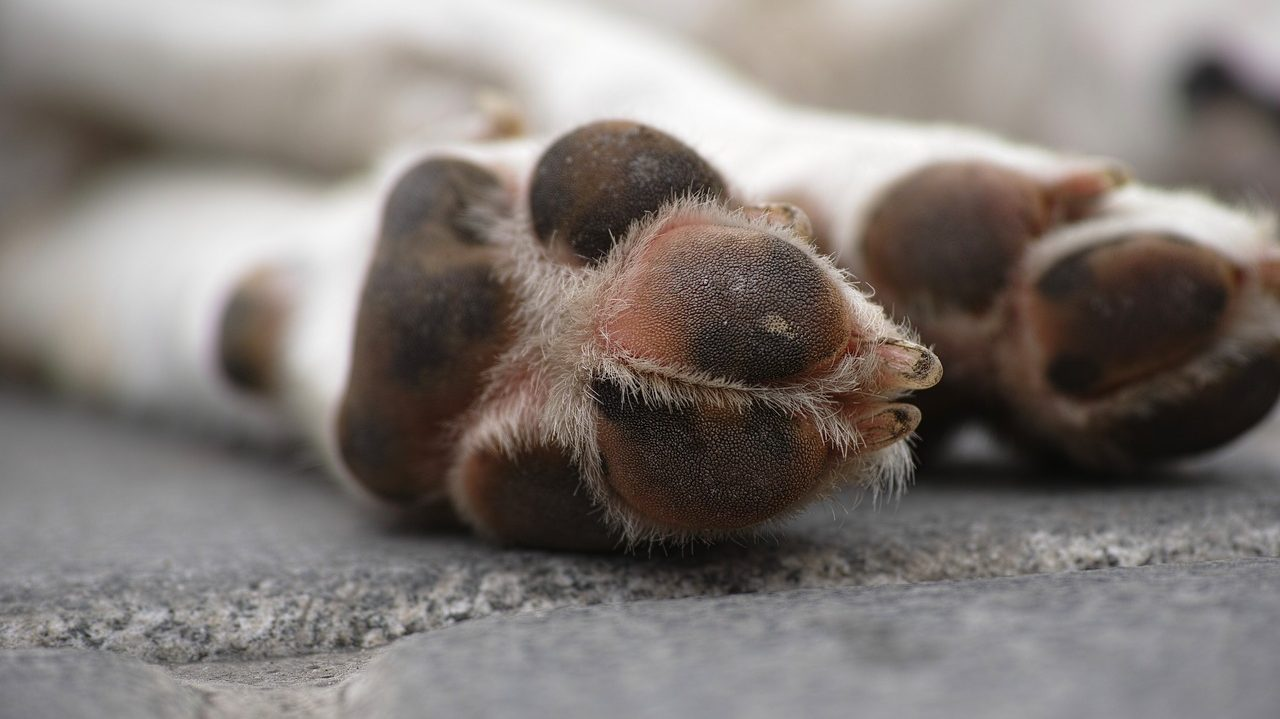 Why Larger Dogs Die Younger? |