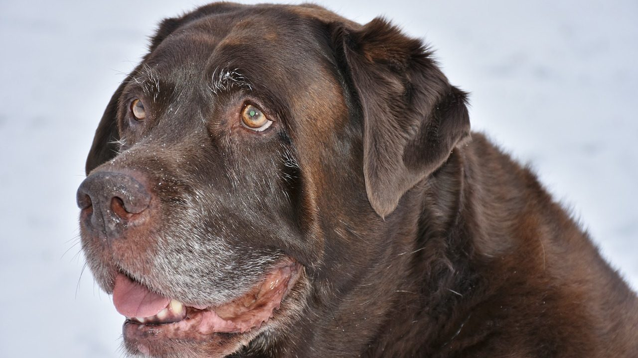 Tips To Help a Senior Dog Navigate Aging |