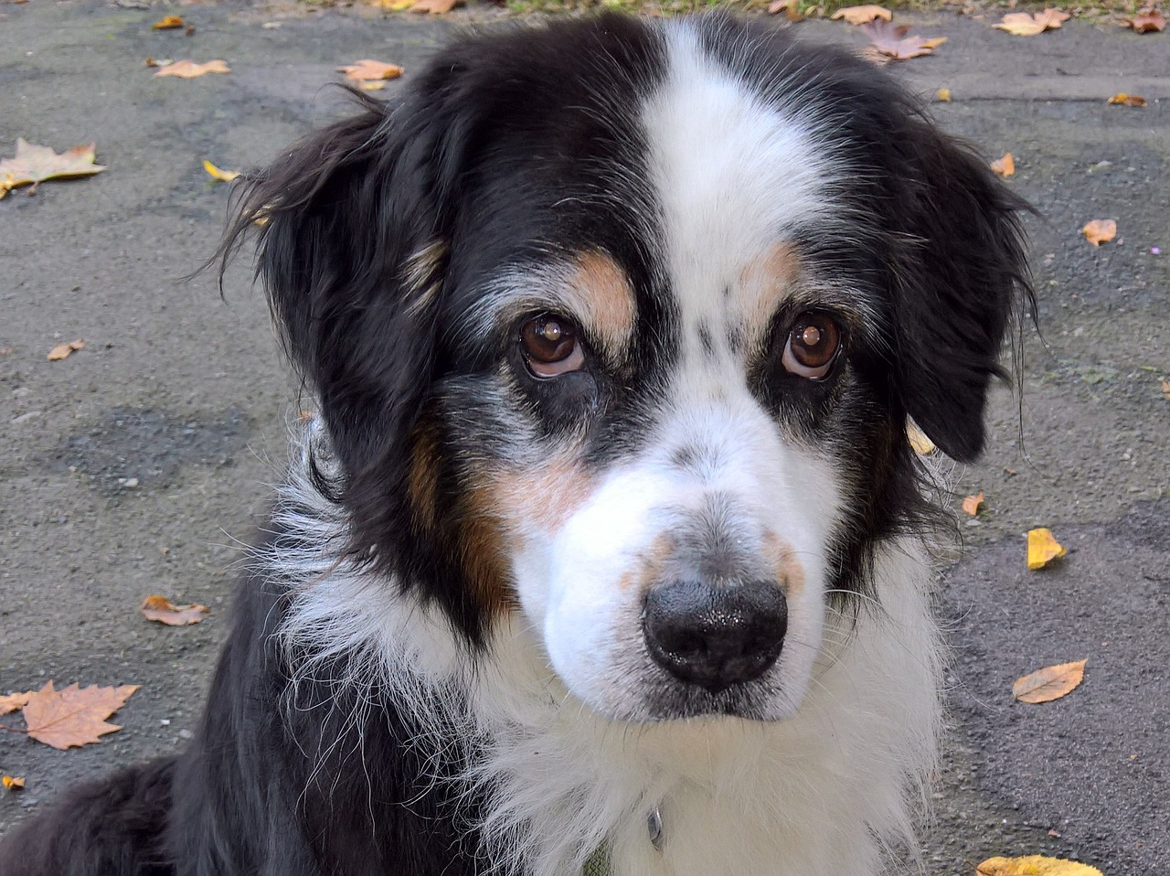 Is Incontinence A Reason to Euthanize A Dog?