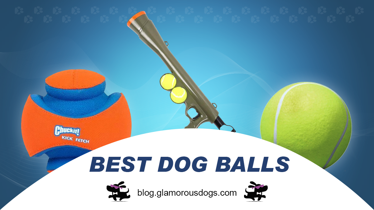 Top 5 Best Dog Balls That Your Dog Can't Get Enough Of |