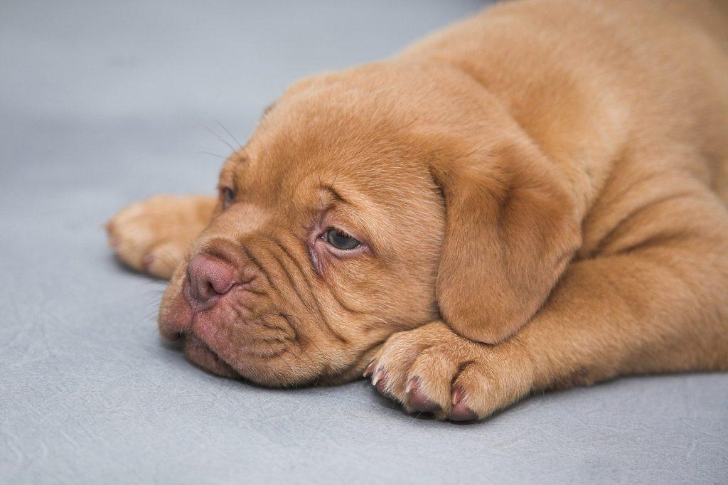 put your dog to sleep