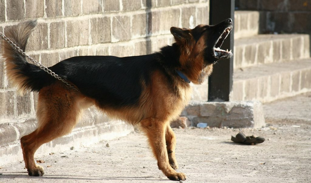 Can shock collars cause heart problems in dogs? - An angry dog