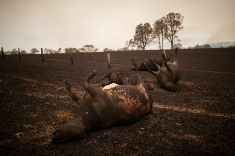 Millions of Animals Are Killed by Australias Fires, but You Can Help! |