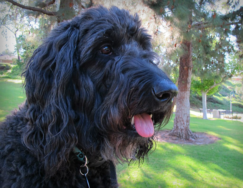 Are Ultrasonic Dog Repellers And Deterrents Harmful & Cruel?