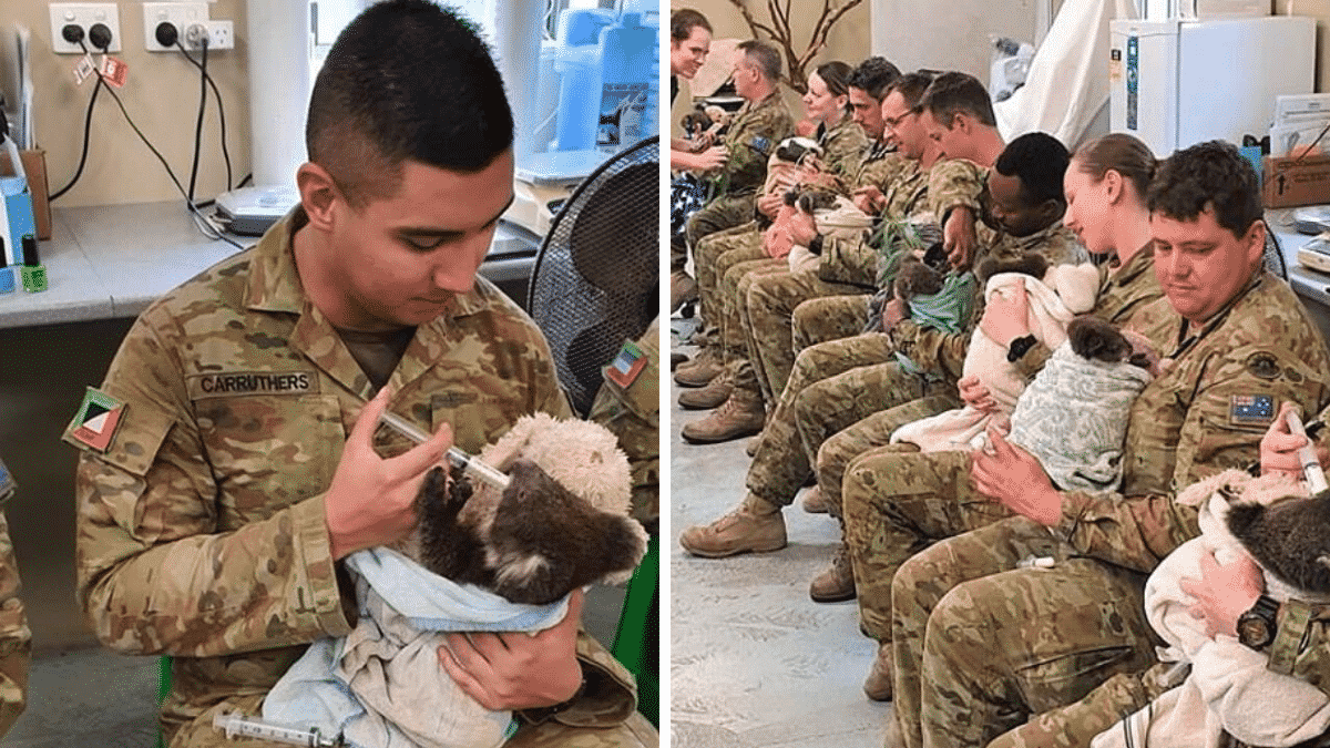 Soldiers On Duty Are Spending Their Rest Time Caring for Rescued Koalas Written by Nada  in Stories