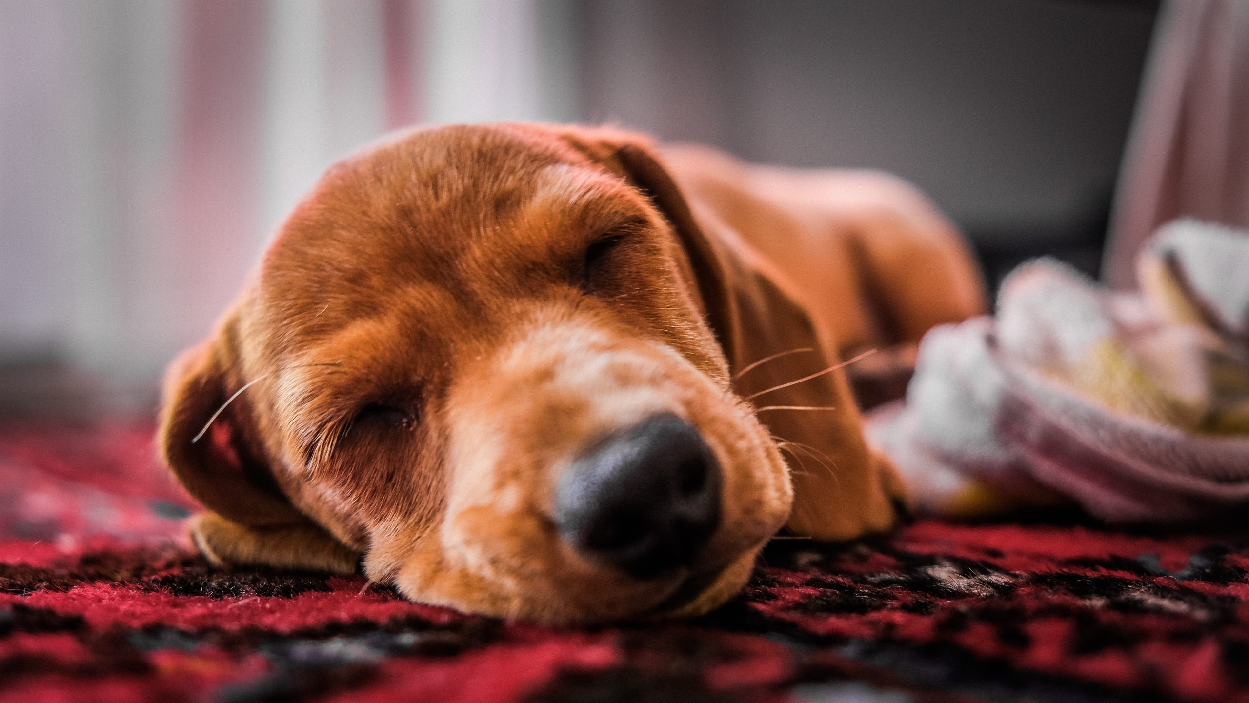 What Do Dog Sleeping Positions Mean?
