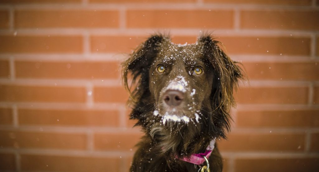 how cold is too cold for dogs